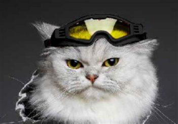 Croci skibril hond horizon zwart / geel glas