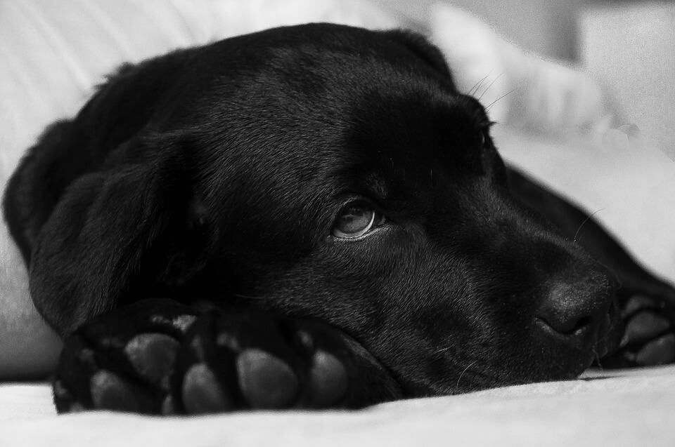 hond diarree s nachts