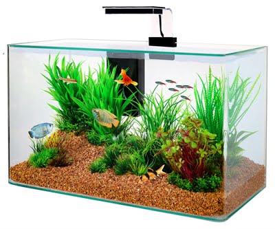 Zolux aquarium clear kit zwart (32 LTR 50X25X38 CM)
