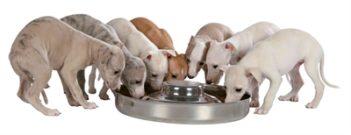 Trixie junior puppyvoerbak rvs (29 cm 1400 ml)