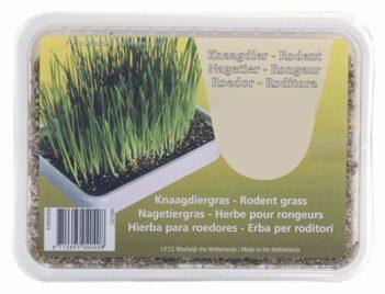 Knaagdiergras in plastic box (130 gr)