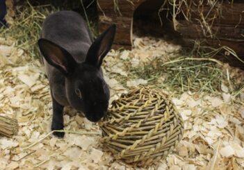 Happy pet speelbal wilg (large 14x14x14 cm)