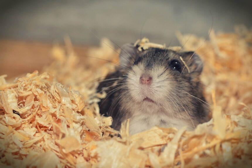 bodembedekking hamster