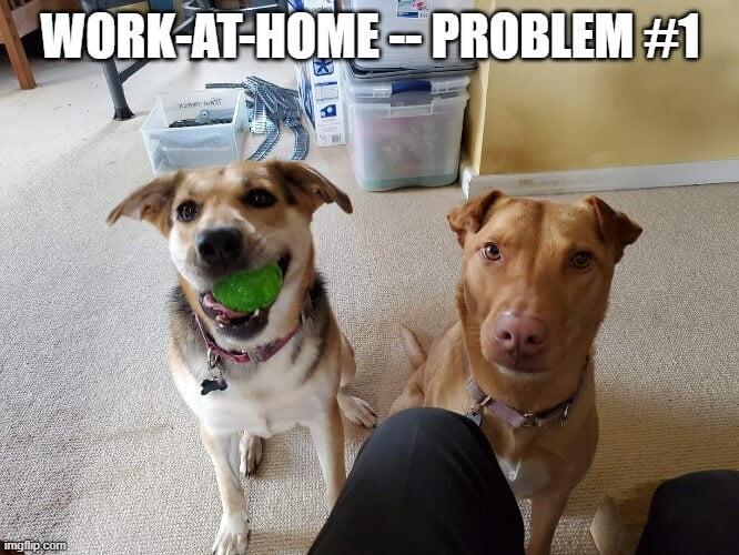 thuis werken met huisdieren