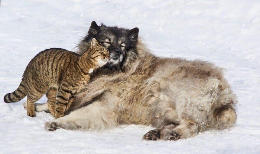 giardia hond kat mens