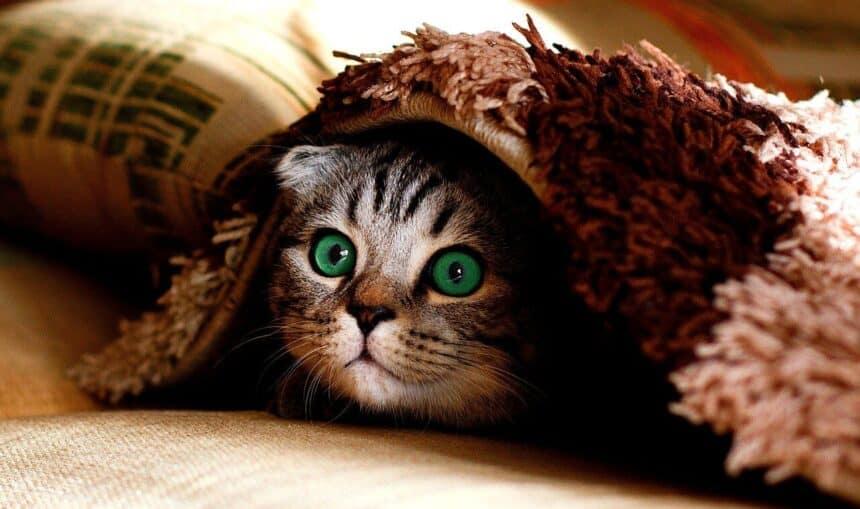 niesziekte katten