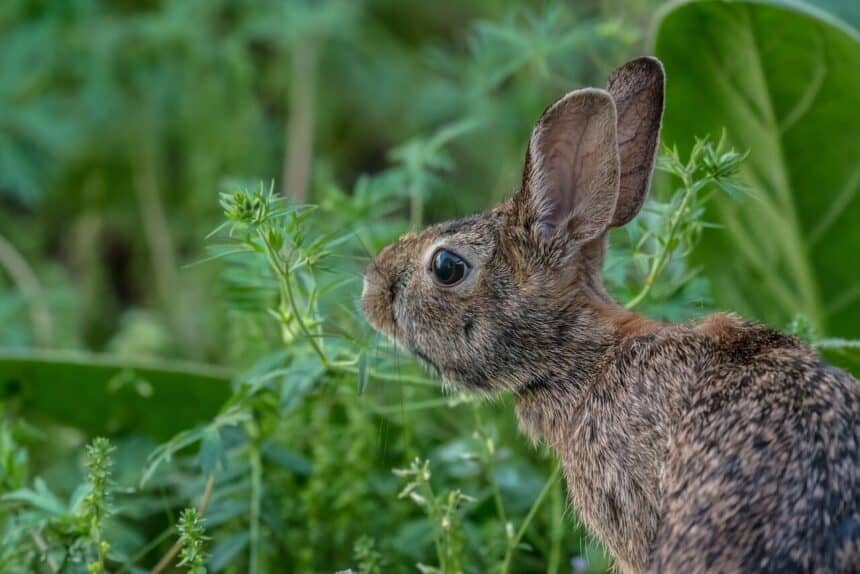 giftige planten konijnen